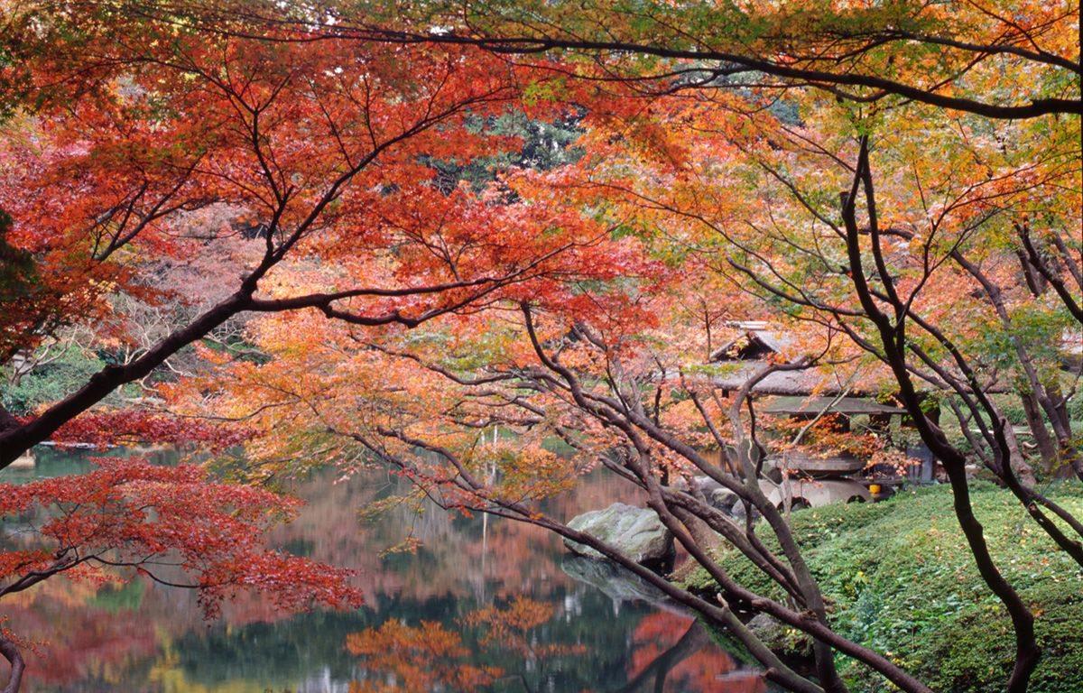八芳園の春の秋の日本庭園
