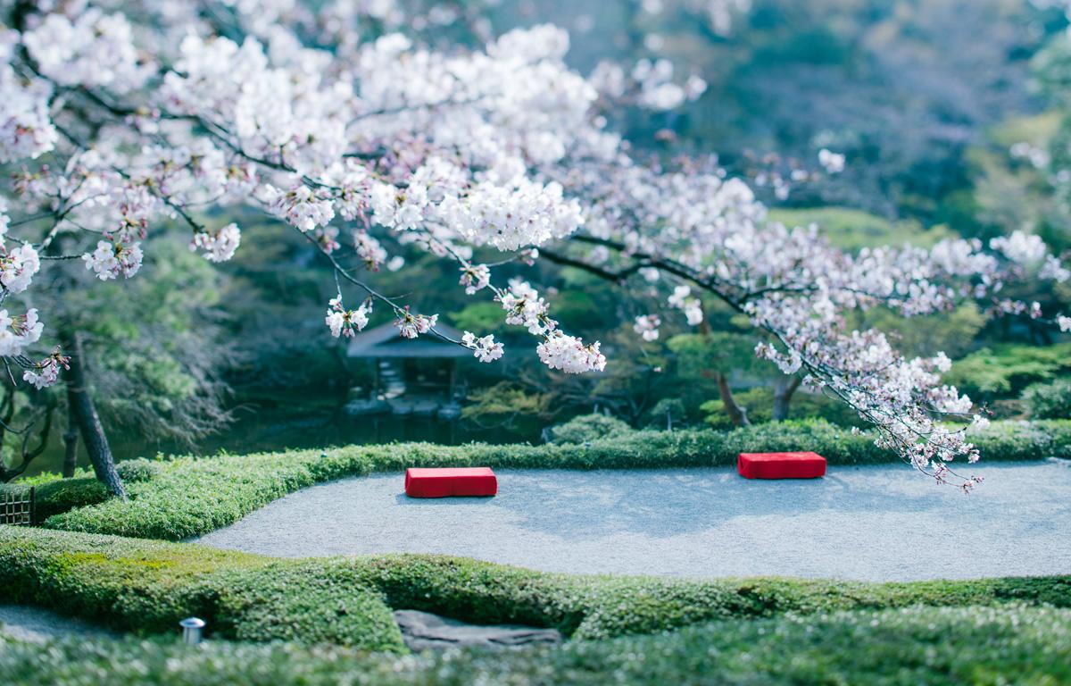 八芳園の春の日本庭園